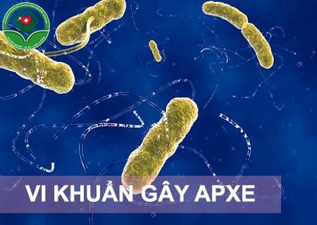 apxe hậu môn do vi khuẩn